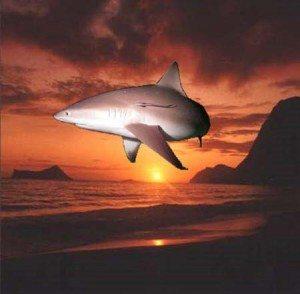 Sun Shark....get it?!