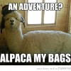 funny-adventure-alpaca-my-bags-pun-joke-pics