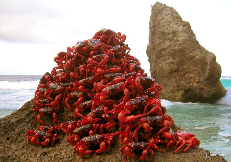 demon crabz