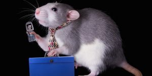 business-rat-crop-793x396